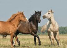 Drei Pferde auf der Weide