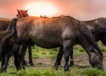 Gesunde Pferde auf der Weide