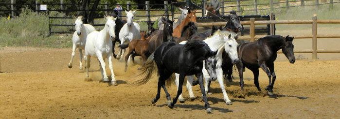 Gesunde Pferde in der Herde