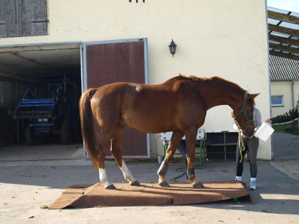 Pferd auf der Pferdewaage