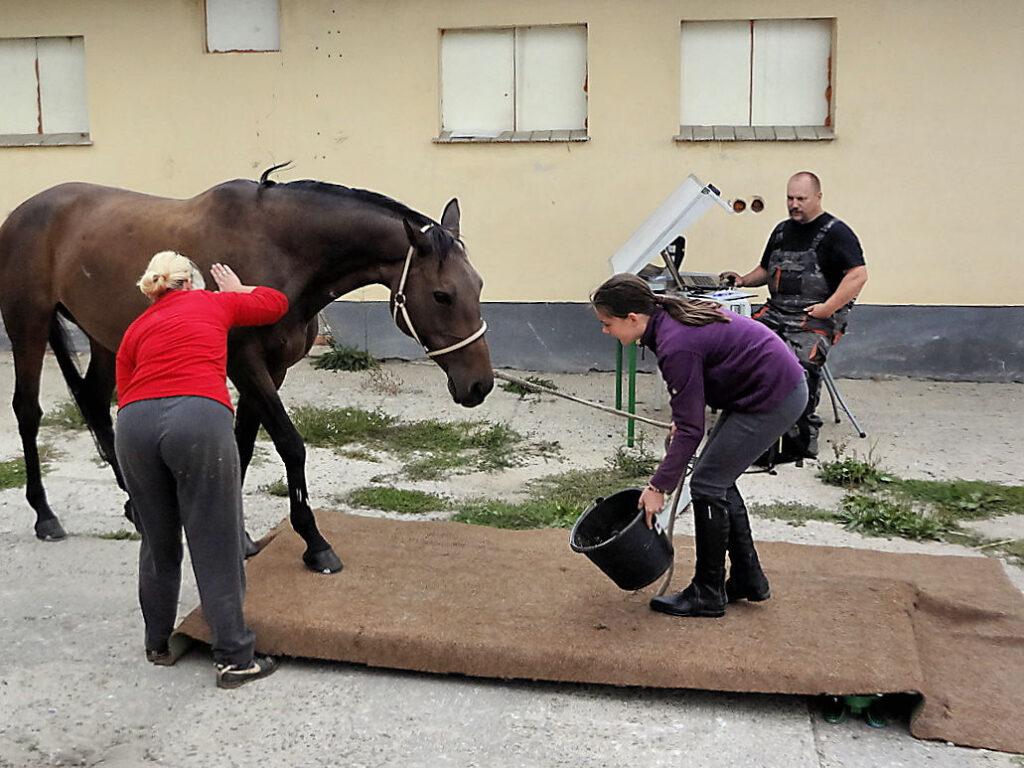 Pferd betritt die Waage